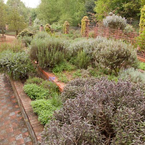 Salvia and Rosemarinus, The Hill Garden 1